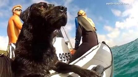 Portano il cane sulla barca: si tuffa in mare e non crederete a quello che fa