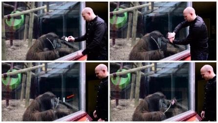 Il gioco di magia dell'orango: il mago lo impressiona e lui ci riprova