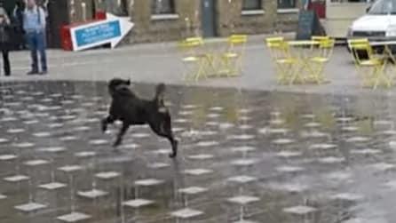 Partono gli zampilli e lui non resiste: ecco come si diverte questo simpatico cane