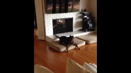 La divertente reazione del cane quando scopre che è il giorno del suo compleanno