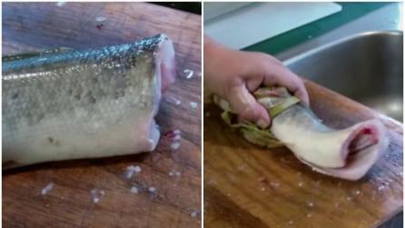 Ecco perché il pesce continua a muoversi dopo essere stato decapitato