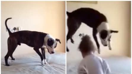 Le bimbe saltano sul materasso e quello che fa il cane è troppo divertente