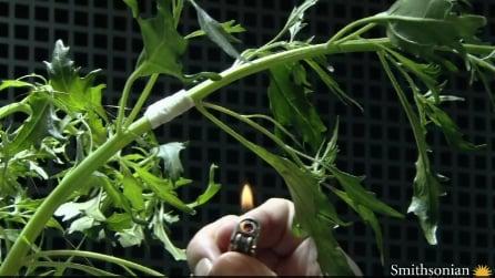 Pensi che le piante non sentano dolore? Ecco cosa succede se le maltratti