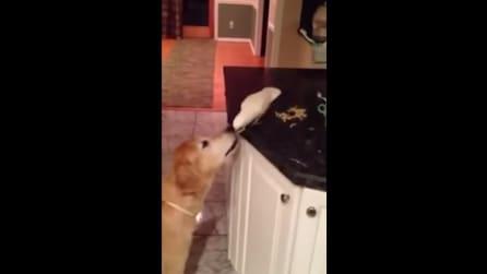 La scena più tenera vista in cucina: osservate cosa fanno cane e uccellino