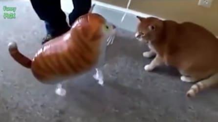 La divertente reazione del gatto quando vede il palloncino che gli somiglia