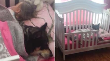 Ela não consegue encontrar o cachorro. Veja onde ele está escondido