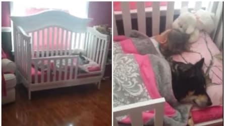 Non trova più il cane e guardate dove si è nascosto