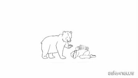 Ecco cosa fare se incontrate un orso nel bosco
