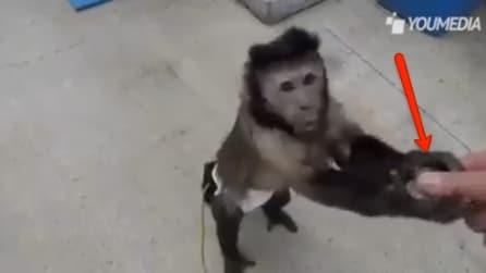 Dà i soldi alla scimmietta e guardate lei cosa fa, incredibile