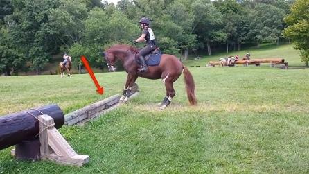 Il cavallo non sembra prontissimo a saltare l'ostacolo, ecco come reagisce