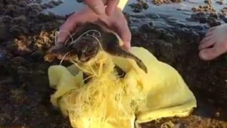 Ecco cosa succede quando si buttano i rifiuti in mare