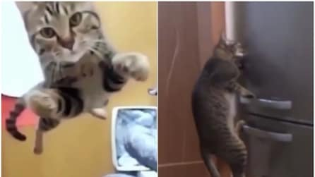 Quando i gatti diventano supereroi: quello che riescono a fare è da non credere