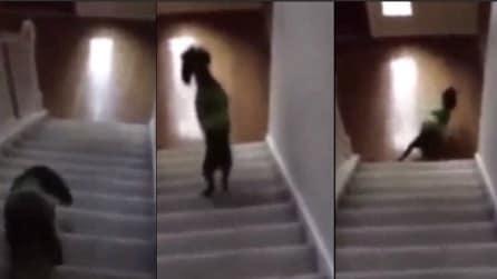Quello che fa questo cane mentre scende le scale vi farà troppo ridere