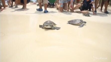 La nuova vita di 65 tartarughe marine: le splendide immagini