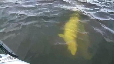 """Inizia a suonare """"Yesterday"""" dei Beatles sulla barca e guardate chi si avvicina"""