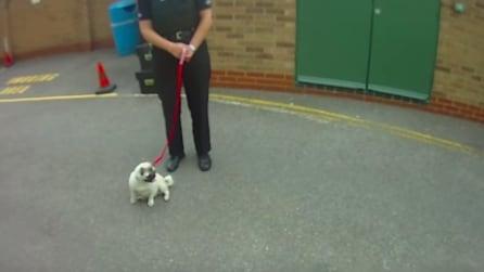 La padrona arrestata esce dalla caserma e la reazione del cagnolino è fantastica