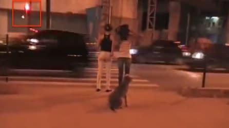 Fate attenzione a tre cose: il semaforo, i pedoni e il cane. Guardate poi cosa succede