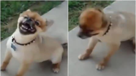 Quando vedrete come starnutisce questo cane lo adorerete