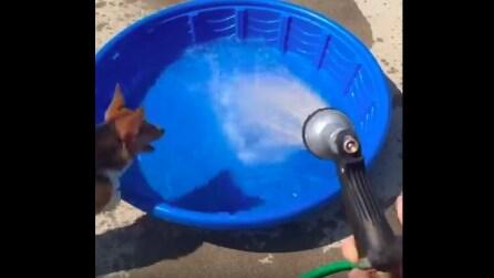 Il padrone apre l'acqua e la reazione del cane vi farà morire dalle risate