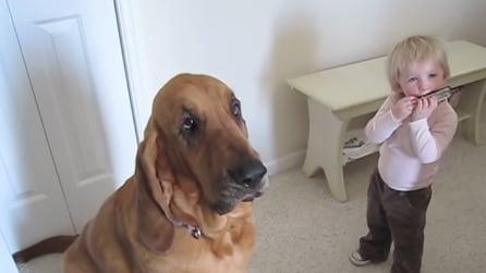 Il bambino suona l'armonica e la reazione del cane è spettacolare