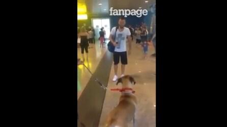 Rivede il padrone dopo mesi: la reazione di questo cane è emozionante