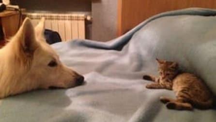 Qualcuno ha lasciato un gattino alla loro porta, l'accoglienza del loro cane li scioccherà