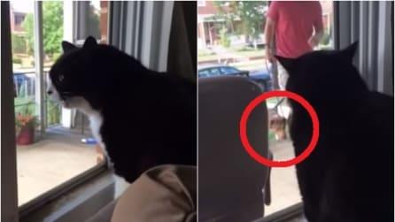 Il padrone porta un nuovo cane a casa e la reazione di questo gatto è spaventosa