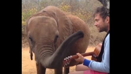 Damon Albarn canta per il suo amico elefantino: la reazione del piccolo è dolcissima