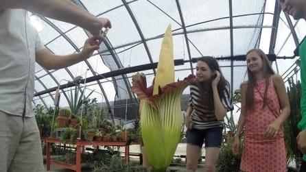 Dopo 13 anni il gigantesco fiore sboccia: uno spettacolo unico