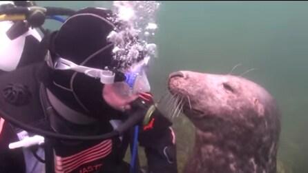 La foca si avvicina al sub per chiedergli qualcosa: ecco cosa accade