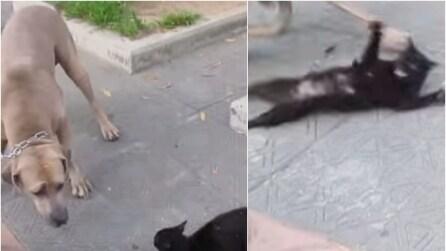 """Il cane """"attacca"""" i suoi gattini, la reazione di mamma gatto è sorprendente"""