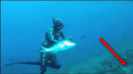 Il sub pesca un grosso pesce ma una brutta sorpresa lo aspetta dietro l'angolo