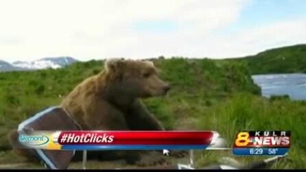"""Uno """"spaventoso"""" incontro, l'orso Grizzly si siede accanto a lui: guardate dopo che succede"""