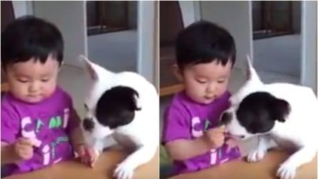 Il cane gli ruba la torta dalle mani, la reazione del piccolo è immediata