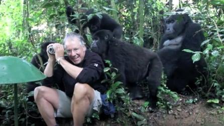 Si ritrova circondato da una famiglia di gorilla: quello che accade è incredibile