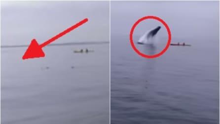 Sono tranquilli a bordo del kayak quando all'improvviso accade qualcosa di sconvolgente