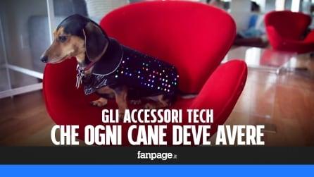 Gli accessori tecnologici che ogni cane deve avere