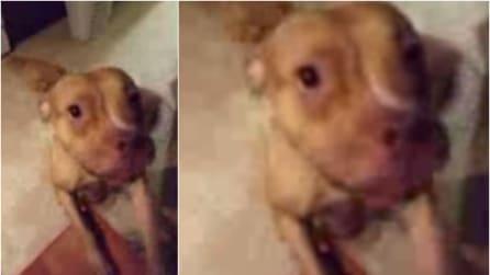 Prima li chiama in modo dolce ma poi sembra arrabbiato: la reazione dei cani è tenerissima