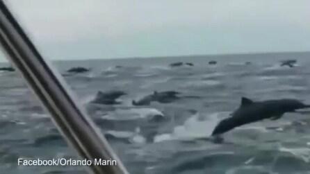 Circondati da migliaia di delfini: quello che accade attorno a loro è spettacolare