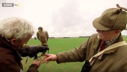 Liberano il falco ma quello che accade dopo li lascia scioccati