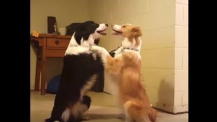 """La padrona dice """"bacio"""" e quello che fanno i due cani è dolcissimo"""