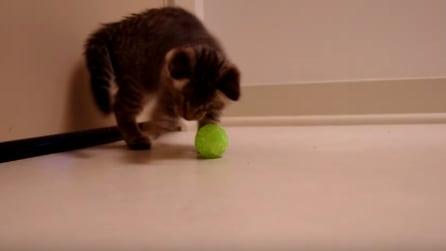 È cieco dalla nascita ma ecco cosa è in grado di fare questo gattino