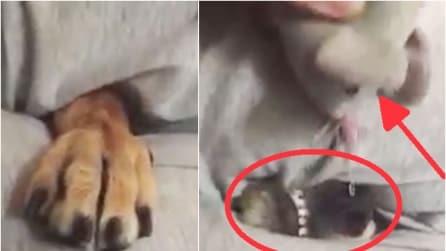 Il cane che impazzisce per il topino giocattolo: guardate da dove sbuca
