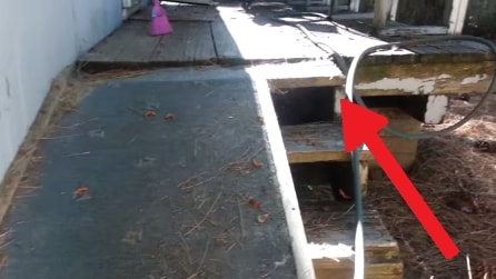 Strani rumori da sotto il portico, mette una telecamera e fa una scoperta spaventosa