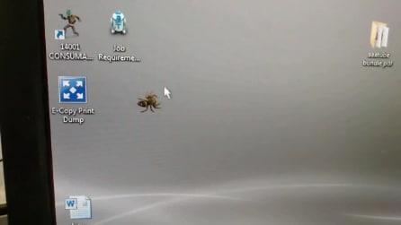Un ragno sullo schermo: ecco come reagisce quando si muove il cursore del mouse