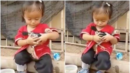 La piccola si prende cura del tacchino: le tenere immagini