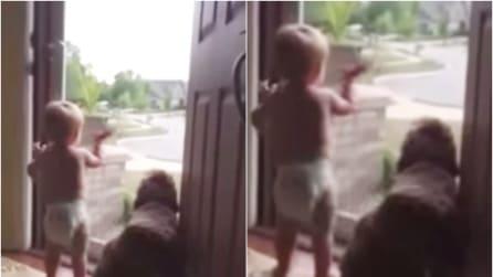"""""""È arrivato papà!"""": l'entusiasmo del bambino e del cane vi scalderà il cuore"""