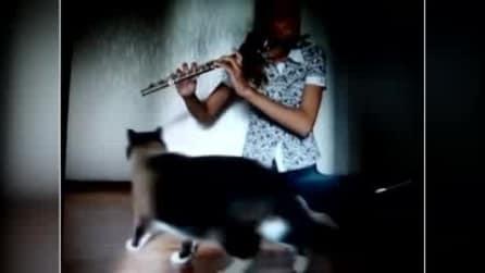 La sua padrona suona il flauto ma al gatto non piace ed ecco come reagisce