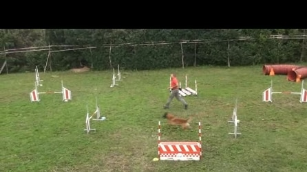 3 X sagra dell' uva di Pontida del 2015 agility dog ultimo video
