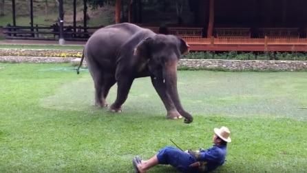 L'uomo finge di sentirsi male: ecco la reazione dell'elefante